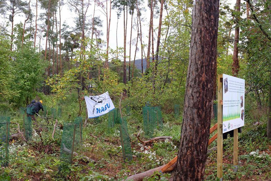 Im Grünen verwurzelt - Wild Beauty unterstützt NABU