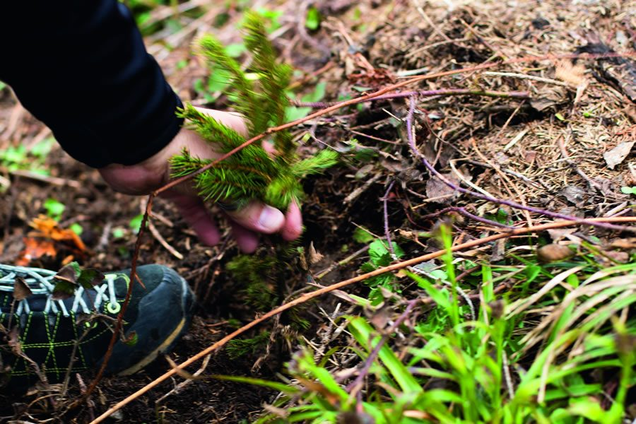 La Biosthétique pflanzt 1000 Bäume im Kanton Schwyz