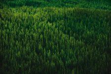 11 | Earth Day: Mit Paul Mitchell® die Welt grüner machen