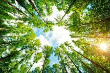 12 | Earth Day: Mit Paul Mitchell® die Welt grüner machen