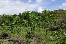 14 | Earth Day: Mit Paul Mitchell® die Welt grüner machen