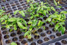 18 | Earth Day: Mit Paul Mitchell® die Welt grüner machen