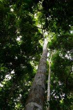 30 | Earth Day: Mit Paul Mitchell® die Welt grüner machen