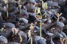 6 | Earth Day: Mit Paul Mitchell® die Welt grüner machen