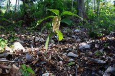 7 | Earth Day: Mit Paul Mitchell® die Welt grüner machen