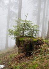11 | La Biosthétique pflanzt 1000 Bäume im Kanton Schwyz