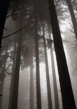 12 | La Biosthétique pflanzt 1000 Bäume im Kanton Schwyz
