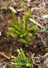 2 | La Biosthétique pflanzt 1000 Bäume im Kanton Schwyz