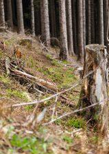 3 | La Biosthétique pflanzt 1000 Bäume im Kanton Schwyz
